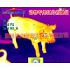 猪牛羊场新款热像仪新货,宠物热成像技术,大型养殖场热像仪