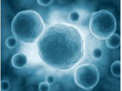 春节特惠| JEG-3细胞(通过STR鉴定)