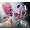 TE-1细胞(通过STR鉴定)|春节特惠
