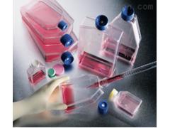 ZR-75-30细胞(通过STR鉴定)|春节特惠
