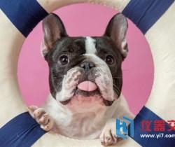 AI新技术帮你了解狗狗们的内心
