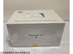 人钙联蛋白ELISA试剂盒