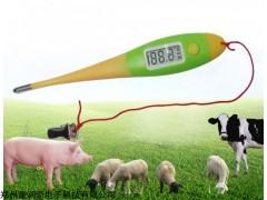 养猪测温就是轻松,猪快速测温,猪用电子体温计,兽用电子体温计