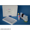 48T/96T 人抗BB抗體(BB-Ab)ELISA試劑盒操作說明