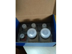 DAPI简易细胞核形态染色试剂盒