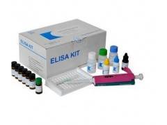 48T/96t 免疫球蛋白D(IgD)ELISA试剂盒