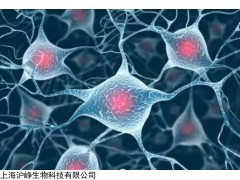 WERI-Rb-1 人视网膜神经胶质瘤细胞WERI-Rb-1高校合作