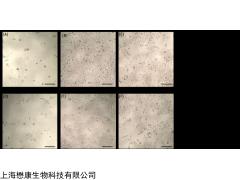 MX0926 Fibronectin 纤连蛋白