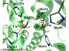 MP0507 Tyrosinase 多酚氧化酶