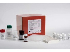 pERK试剂盒厂家,猪磷酸化细胞外信号调节激酶