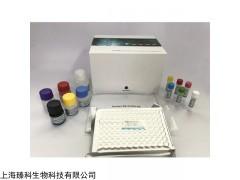 人立克次体病rickettsiosis检测试剂盒