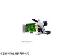 结核杆菌检测荧光显微镜 BK-FL