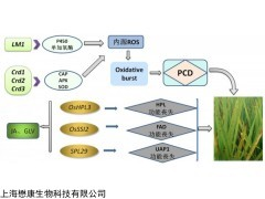 MX7277 Dihydrojasmonic Acid 二氢茉莉酸
