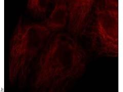 MX4669 Cyanine7 NHS Ester
