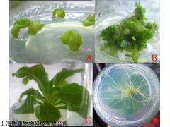 MF3723 pBI121植物表达载体