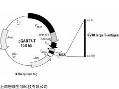 MF3605 pGADT7-T Vector