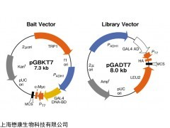 MF3603 pGBKT7-Lam Vector