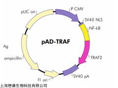 MF2315 XL10-Gold 大肠杆菌化学感受态细胞