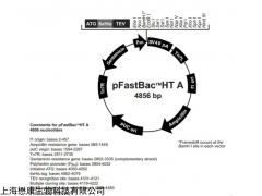 MF2320 JM110大肠杆菌化学感受态细胞