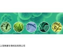 MF2312 0大肠杆菌化学感受态细胞