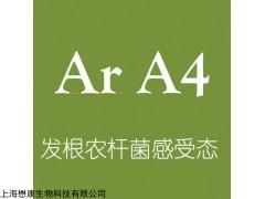 MF2458 Ar A4农杆菌电转感受态细胞