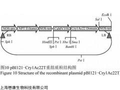 MF2487 JM109大肠杆菌化学感受态细胞