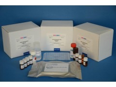 48t/96t 小鼠雌二醇受体(ER)ELISA试剂盒使用说明书