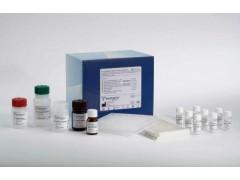 48t/96t 豚鼠血清总补体(CH50)ELISA试剂盒使用说明书
