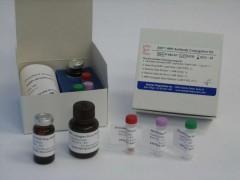 M-13单链DNA小提/大提/96孔板提取试剂盒